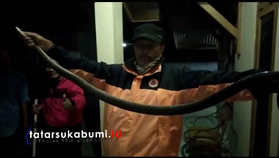 Ular Kobra Serang Anggota Linmas di Nyalindung Sukabumi