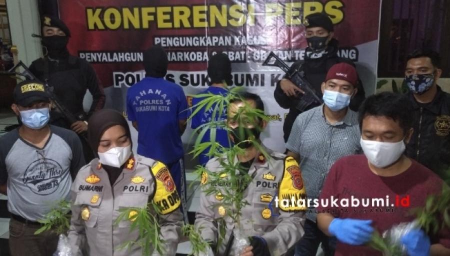Polisi Bongkar Kasus Penanaman Pohon Ganja di Sukabumi