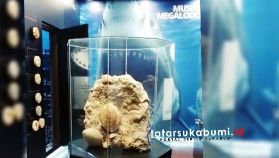 Museum Hiu Purba Pertama di Indonesia Ada di Sukabumi Selanjutnya Museum Site Taman Megalodon Direncanakan