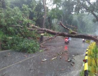 Pohon Tumbang di Jalan Cibadak Palabuhanratu Sempat Tutup Akses Jalan