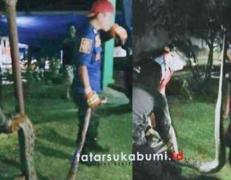 Piton Pemangsa Hewan Ternak di Parungkuda Itu Ditangkap Tim Rescue Damkar Kabupaten Sukabumi