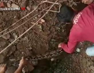 Warga Temukan Ular Piton Besar Pasca Bencana Longsor di Cibadak Sukabumi