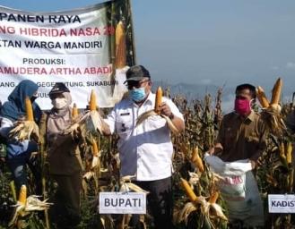 Kebutuhan Jagung 350 Ton Perhari, Marwan Hamami Ajak Masyarakat Tanam Jagung