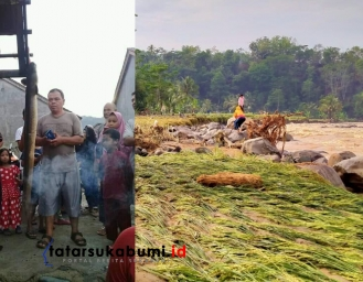 Sungai Cibareno Cisolok Meluap 10 Hektare Sawah Siap Panen Rusak Diterjang Banjir