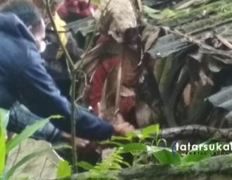 Ular Piton Pemangsa Ternak Warga Nagrak Sukabumi Berhasil Diamankan Petugas