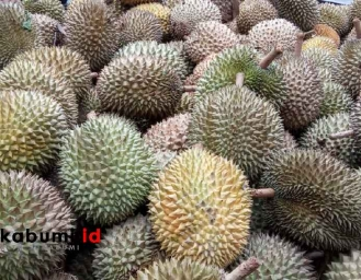 Pekan Festival Durian Di Kawasan Wisata Edukasi Kalapanunggal Sambil Melihat Budidaya Arwana Kambing Etawa dan Ayam Sentul